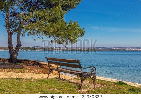 Empty Wooden Bench And Pine Tree Near The Coastline