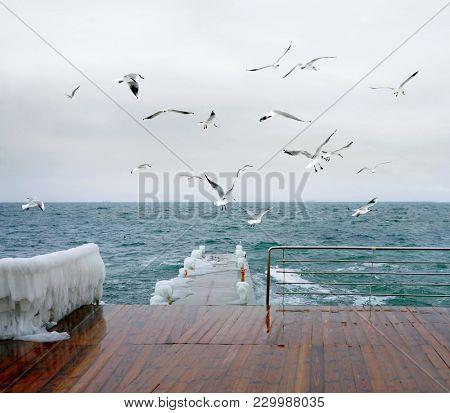Storm at sea. Seagulls