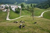 Lessinia (Verona Veneto italy) landscape: village and cows at pasture poster