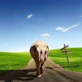 Collage of Elephant Bull in walking on a road poster