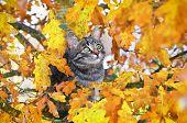 Beautiful kitty sitting on the autumn tree poster
