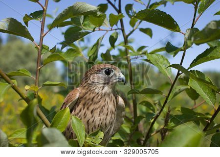 Animal, Avian, Beak, Beauty, Bird, Bird Of Prey, Bird Watching, Birdwatching, Closeup, Common Kestre