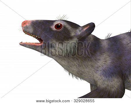 Purgatorius Primate Head 3d Illustration - Purgatorius Was A Proto-primate That Lived In Montana, No