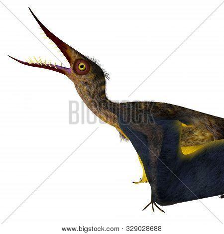 Rhamphorhynchus Reptile Head 3d Illustration - Rhamphorhynchus Was A Carnivorous Predatory Bird That