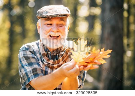 Happy Senior Man Looking At Camera. Senior Citizen Stroll In A Park In Autumn. Fallen Autumn Leaves