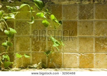 Sink Wall