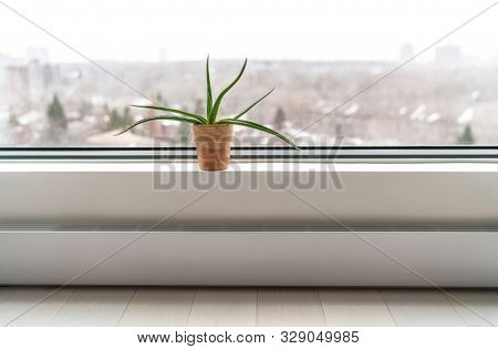 Plant by apartment's window in winter - Air cleaning plant Aloe Vera to clean air from toxic chemicals - natural purifier indoors in condo building.