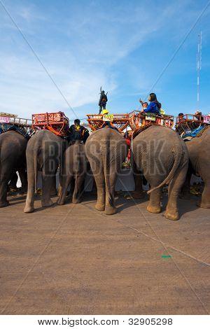 Elephant Breakfast Rear End V