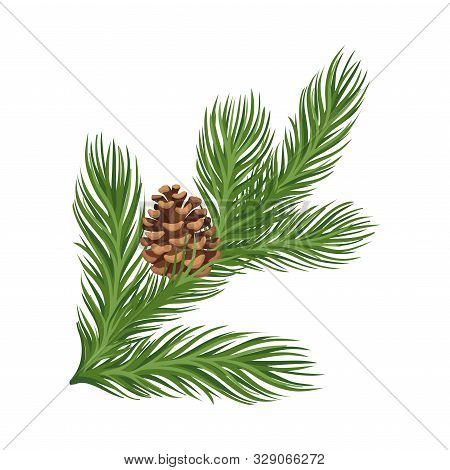 Lush Larch Branch With A Ripe Brown Cone. Vector Illustration.