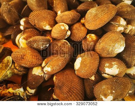 Clams In Fish Market. Close Up Of Pile Of Clams On Display In Fish Market.