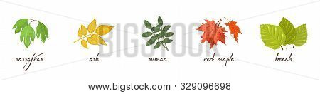 Vector Set With Lettering And Vector Icons Of Sassafras, Ash, Sumac, Maple, Beech. Autumn Sale Desig