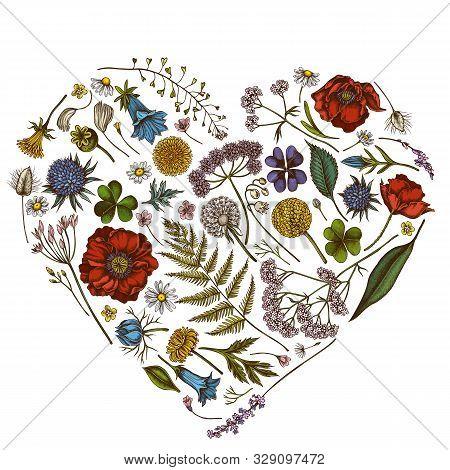 Heart Floral Design With Colored Shepherds Purse, Heather, Fern, Wild Garlic, Clover, Globethistle,