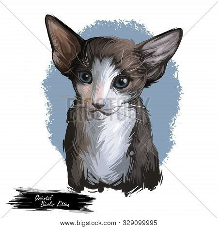 Oriental Bicolor kitten digital art illustration. Watercolor portrait of kitty from USA. Playful american feline breed with triangle head, long body and ears. Domestic per face in closeup with text poster
