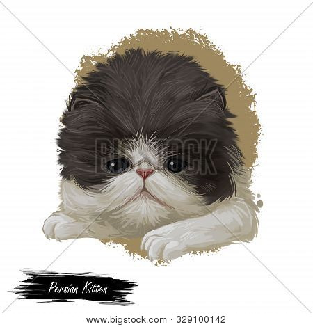 Persian kitten with fluffy fur, digital art illustration. Persian longhair watercolor portrait in closeup. Feline breed of Shirazi or Iranian cat originated from Iran. Domesticated pet drawing poster