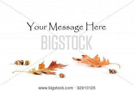 Oak Leaf And Acorn Card