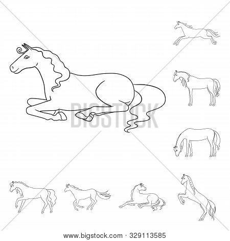 Isolated Object Of Stallion And Galloping Sign. Collection Of Stallion And Riding Stock Symbol For W
