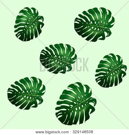 Seamless Pattern Of Beautiful Big Green Leaves Monstera Plant, Monstera On Green Background, Vector