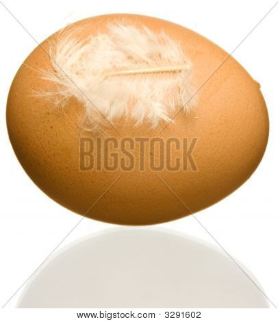 poster of Egg with feather isolated on white background