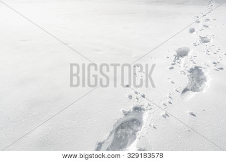 Human Feet Traces In The Snow. Footprints Alley Through The Snow. Winter Background. Snow-covered Na