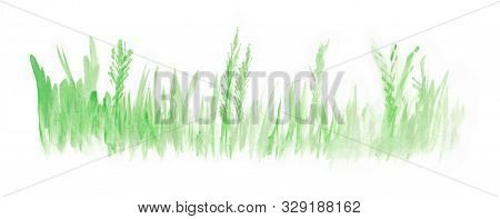 Green Meadow Grass Isolated On White Background, Watercolor Hand Drawing.