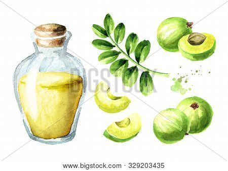 Amla Essential Oil Bottle With  Green Amla Berries And Leaves Set. Watercolor Hand Drawn Illustratio