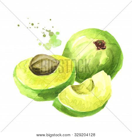 Amla Green Fruits. Watercolor Hand Drawn Illustration Isolated On White Background
