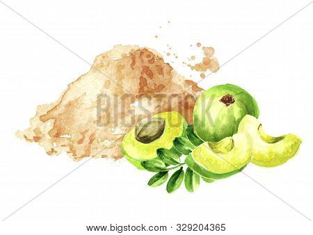 Amla Powder With Green Ripe  Fruits With Leaves, Watercolor Hand Drawn Illustration, Isolated On Whi