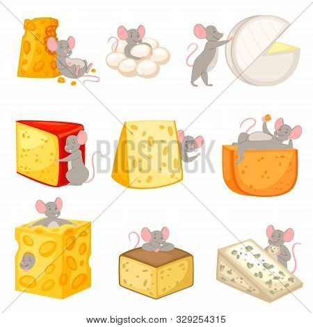 Cartoon Mouse Vector Kids Mousy Animal Character Rodent And Rat With Cheese Eating Cheesy Food Illus
