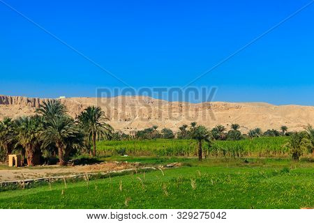 Fertile Banks Of The Nile. Valley Of The Nile River. Palm Trees And Fields On Nile Riverside In Egyp