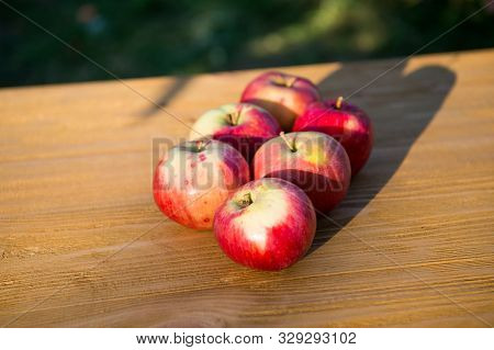 Picnic Concept. Apples Red Ripe Fruits. Healthy Nutrition Concept. Fruit And Vitamin. Red Apples Gat