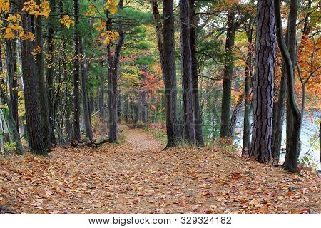 Peaceful Woodsy Scene With Tall Trees Lining Either Side Of Path Covered With Autumn Leaves That Hav