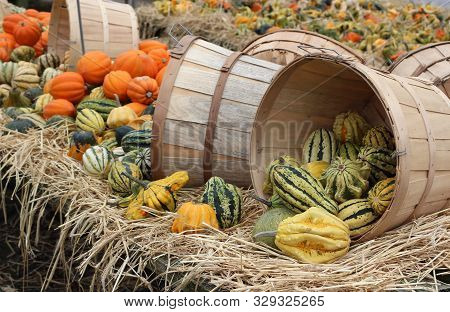 Bales Of Hay With Wooden Baskets That Are On Their Side, Bright And Colorful Gourds Arranged For Sho