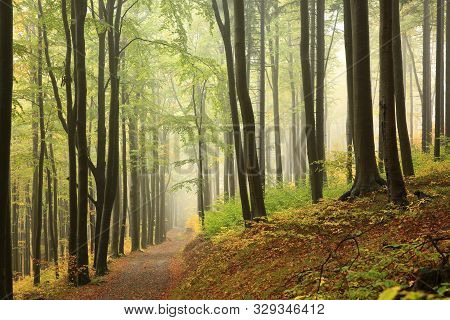 Trail trees in autumn forest Nature landscape Nature background Path Road in Nature. Autumnal forest. colors leaves foliage yellow orange Nature background Travel hiking in Nature Path forest Road mist fog Nature background. Nature Trees Branch fall woods