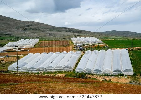 Rows Of Tomato Plants Growing Inside Industrial Greenhouse. Industrial Agriculture.