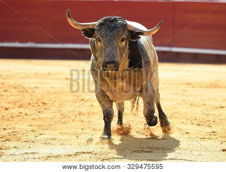 Bull Horns Of Spanish Brave And Angry Bull