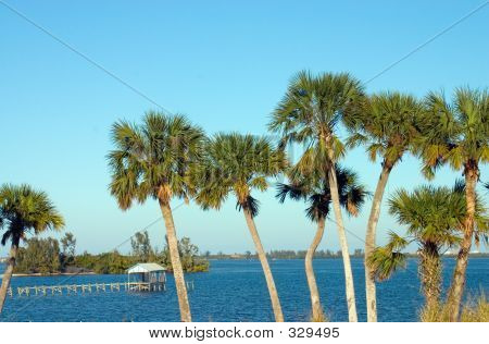 Riverfront Palms