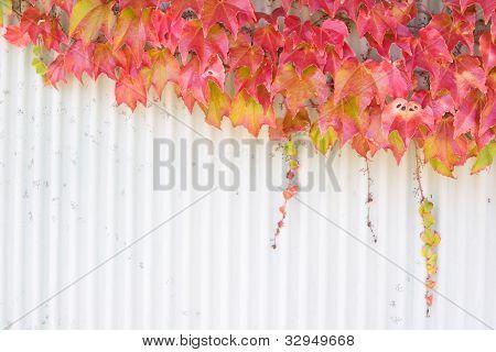 Autumn/fall Foliage.