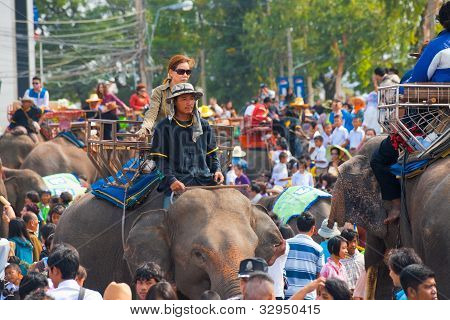 Elephant Crowd Passenger Trainer