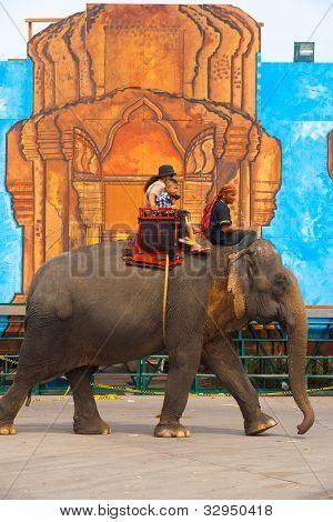 Elephant Passengers Side View