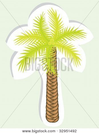 Vector color palm tree.