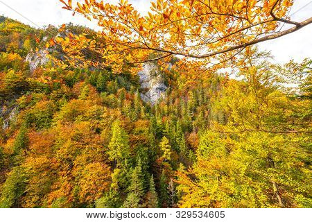 Trees With Colorful Leaves In An Autumn Forest. Kvacianska Valley In Liptov Region Of Slovakia, Euro