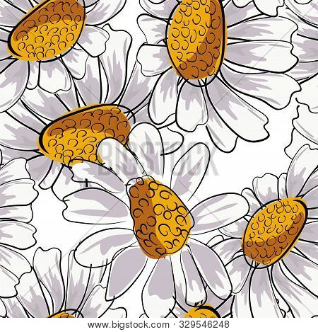 Chamomile Seamless For Decoration Design. Floral Botanical Print. White Daisy Chamomile. Vector Flor