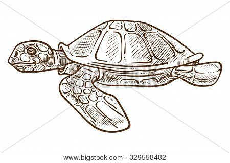 Turtle Or Tortoise Isolated Sketch, Underwater Animal With Shell