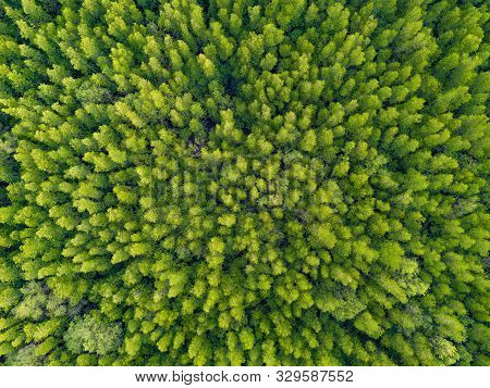Aerial Top View Of Lush Green Trees From Above In Tropical Forest In National Park And Mountain Or H