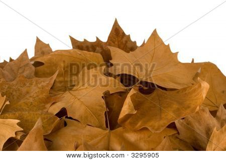 Autumn Sweetgum Leaves