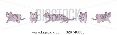 Grey Striped Cat Sneaking. Active Healthy Kitten With Mackerel Tabby Colored Fur, Cute Funny Pet, Pl