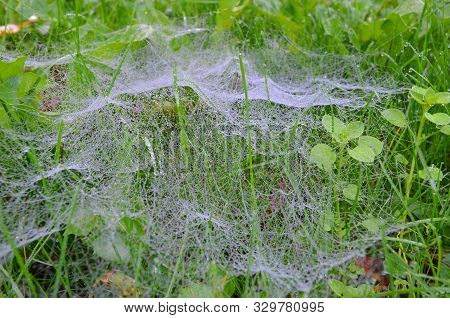 Cobwebs Weaving Through The Grass With Little Effect Blurr