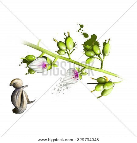 Cardamom, Cardamon Or Cardamum Is Spice Made From Seeds Of Several Plants In Genera Elettaria And Am
