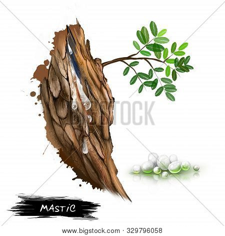 Mastic Resin Obtained From The Mastic Tree Pistacia Lentiscus. Mastic Coming From The Tree. In Pharm