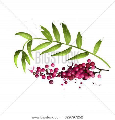 Schinus Molle Peruvian Pepper, American Peruvian Peppertree, Escobilla, False Pepper, Molle Del Peru